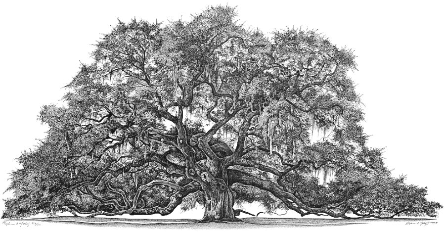 Angel Oak (GICLEÉ)